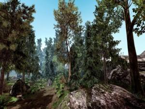 Árboles y rocas