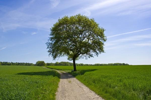 La sombra del árbol en el camino