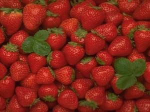 Montones de fresas