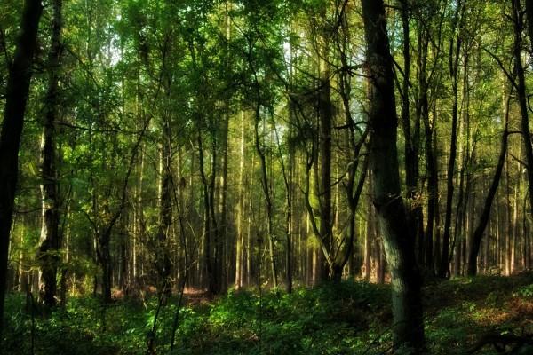 Bosque lleno de árboles