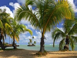 Postal: Playa con muchas palmeras