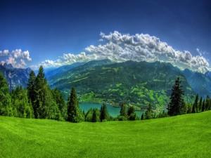 Pinos verdes en la montaña