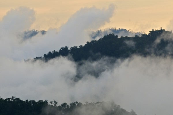 Niebla en la vegetación