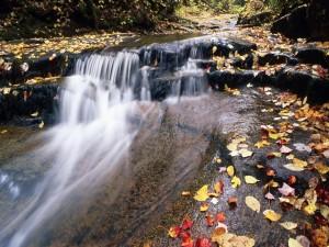 Postal: Hojas de otoño caídas en el río