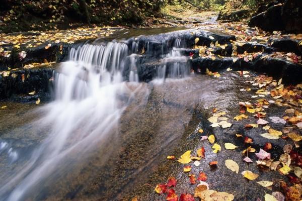 Hojas de otoño caídas en el río