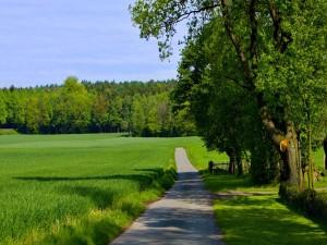 Atravesando un campo verde