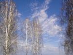 Árboles y nubes