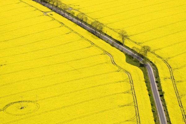 Carretera a través de un campo amarillo