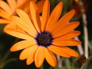 Postal: Flor naranja y morada