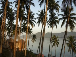 Cabañas entre palmeras