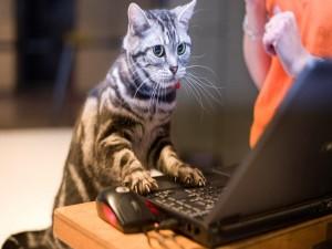 Gato con un portátil
