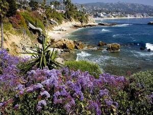 Flores moradas cerca del mar