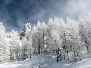 Postal: Árboles vestidos con nieve