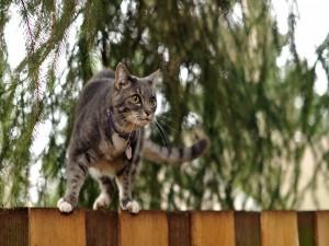 Gato sobre la cerca