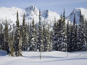 Pinos y montañas blancos por la nieve