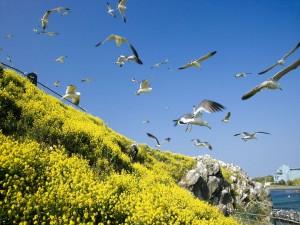 Gaviotas y flores amarillas