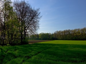 Postal: La sombra de los árboles