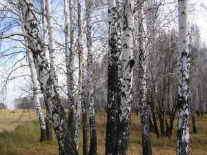 Troncos de árboles