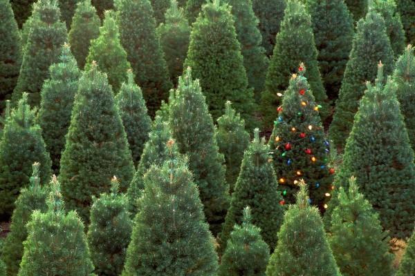 Árboles verdes decorados para Navidad