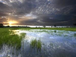 Postal: Hierba en el agua