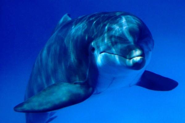 Delfín visto de cerca