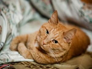 Un gato tumbado