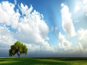 Postal: Árbol bajo las nubes