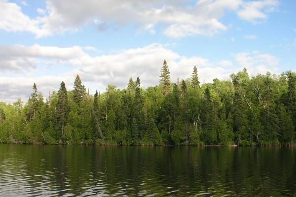 Árboles en la orilla del agua