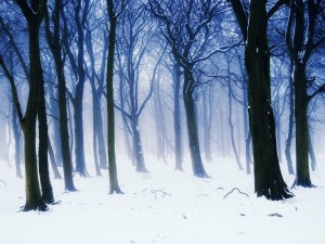 Árboles en la nieve