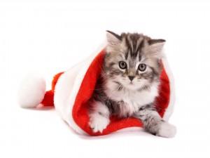 Postal: Gatito dentro de un gorro de Santa Claus
