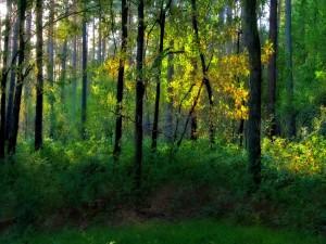 La luz del sol en las hojas de los árboles