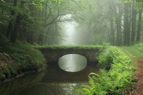 Puente en el bosque