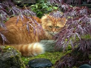 Gato con una mirada penetrante