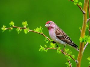 Pájaro en una rama con hojas verdes