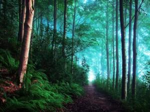 Postal: Luz al final del camino