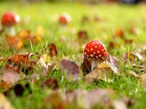Pequeña seta en otoño
