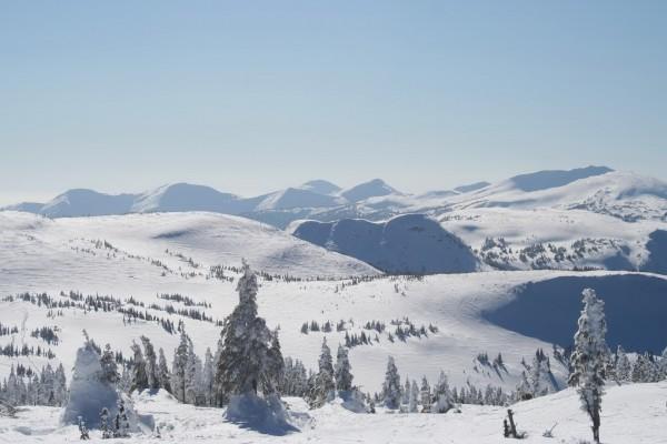 Montañas y pinos cubiertos de nieve