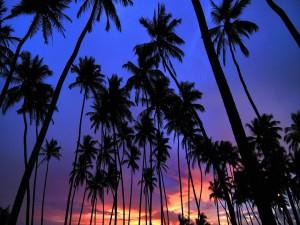 Postal: El cielo y las palmeras