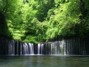 Cascadas entre árboles verdes