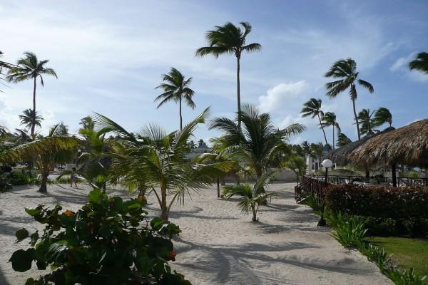 Vegetación en una playa de Punta Cana, República Dominicana