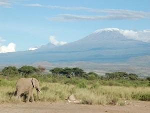 Un elefante, con el Kilimanjaro al fondo