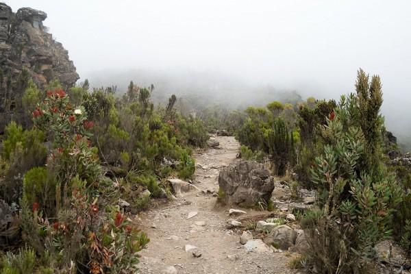 Ruta que serpentea en medio de la vegetación