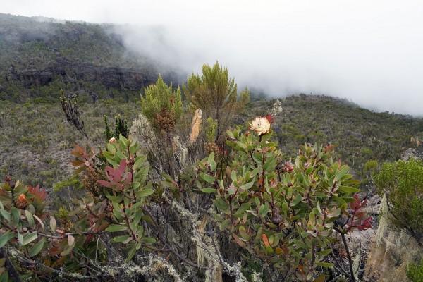 Vegetación en el Kilimanjaro