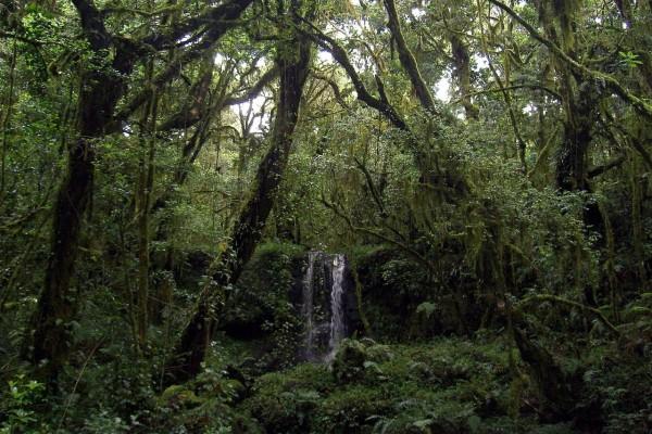 Caída de agua en la selva cerca del Monte Kilimanjaro