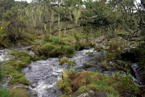 Río Naremoru, cerca del Kilimanjaro