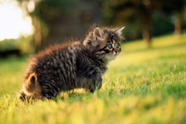 Pequeño gato en la hierba verde