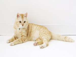 Postal: Gato doméstico