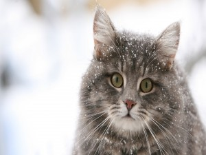 Postal: Un gato con nieve en el cuerpo