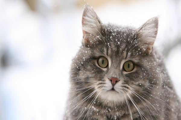 Un gato con nieve en el cuerpo