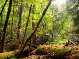 Troncos de árbol con musgo